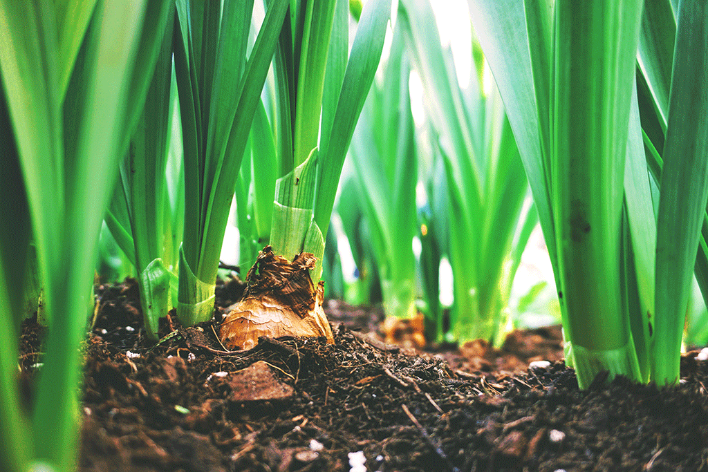 blog organicity 4 principles of organic farming