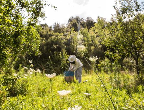 Why organic agriculture is better than conventional one