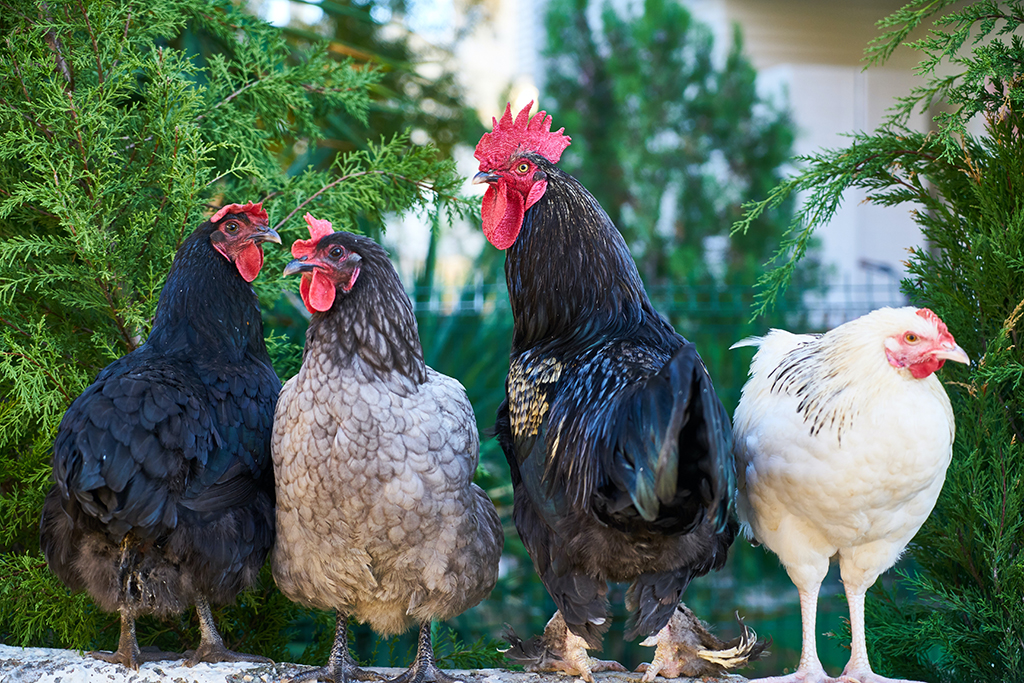 farm to fork organicity