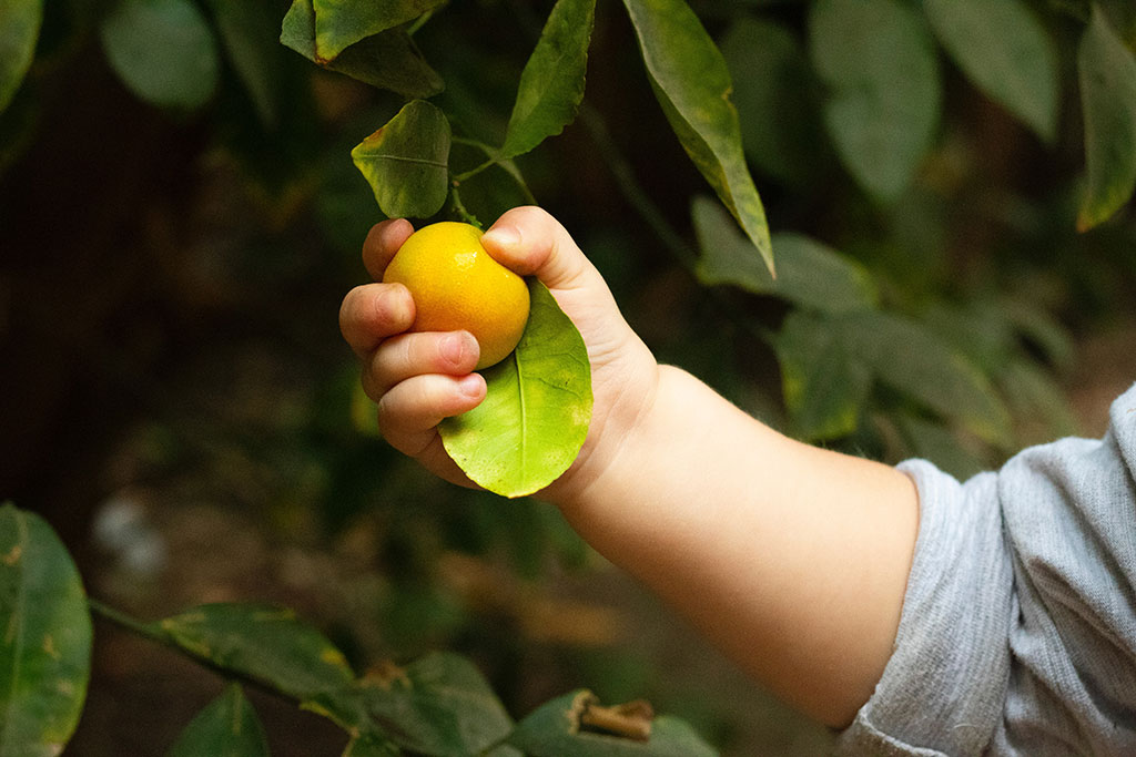 The value of the organic baby food market